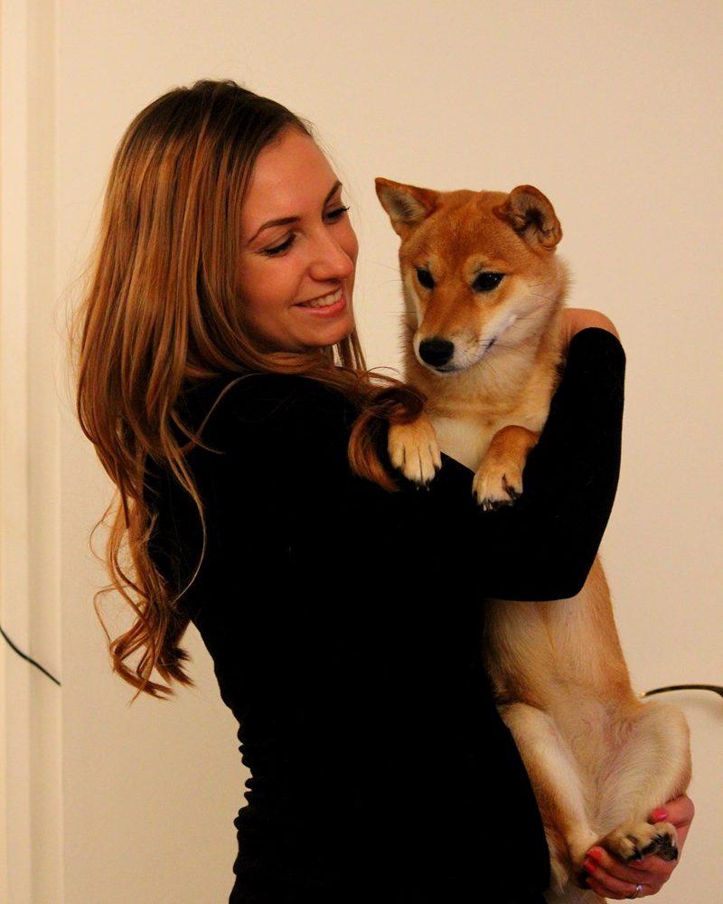 Top 7 des meilleurs éleveurs du chien Shiba Inu